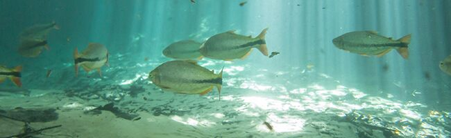 How Water Treatment Plants Protect Fish from Disruptive